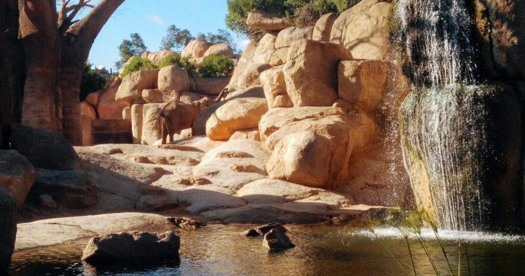 Bioparc Valencia: zooinmersión con niños