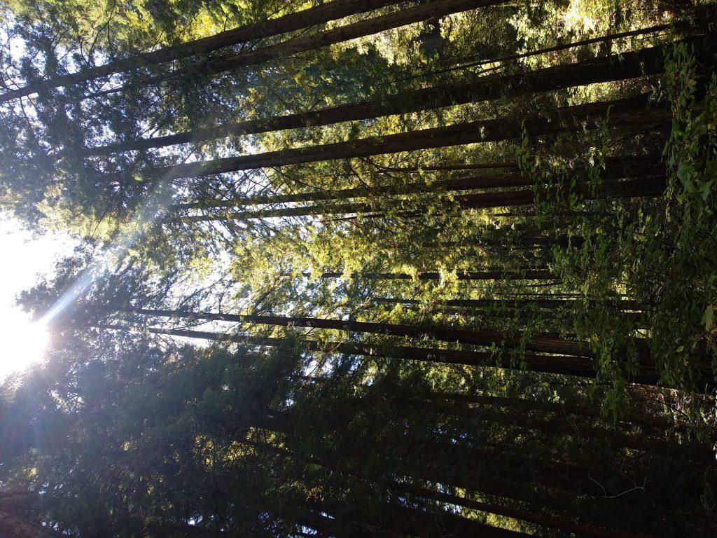 Ir a Muir Woods por tu cuenta
