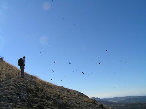 Aves en vuelo sobre ladera montaña