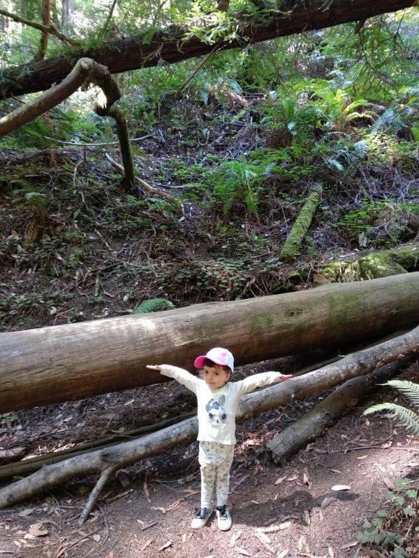 Muir Woods Una semana en san francisco con niños