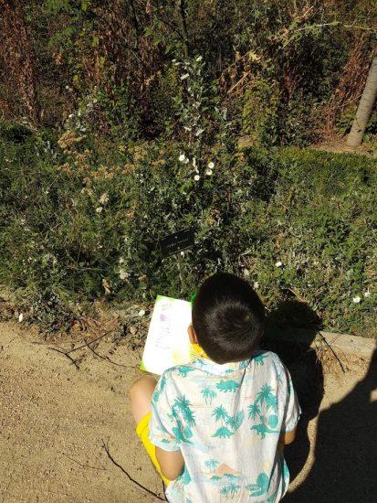 NIño observando letrero de una de las especies del Jardín