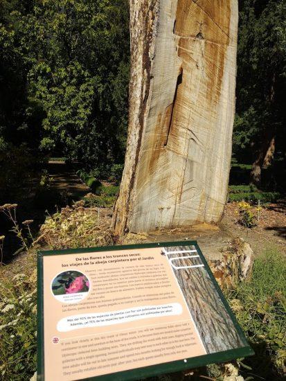 cartel explicativo acerca de las abejas carpinteras