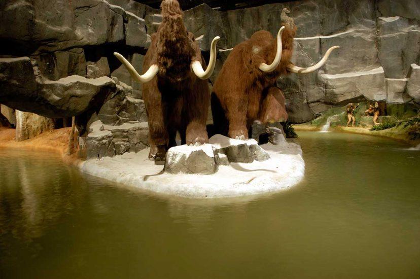 Mamuts rodeados de agua de la atracción