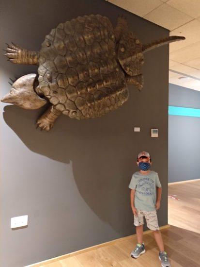 con tortuga prehistórica